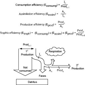 Gambar 1. Efisiensi pada Sistem Trofik (Chapin et al., 2002)