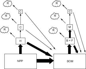 Gambar 1. Skema Sistem Trofik Berbasis Tumbuhan dan Detritus (Chapin et al., 2002)