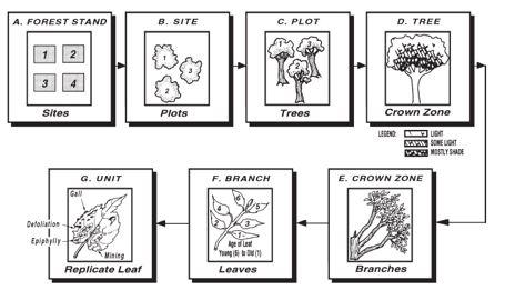 Metode pengambilan daun herbivori